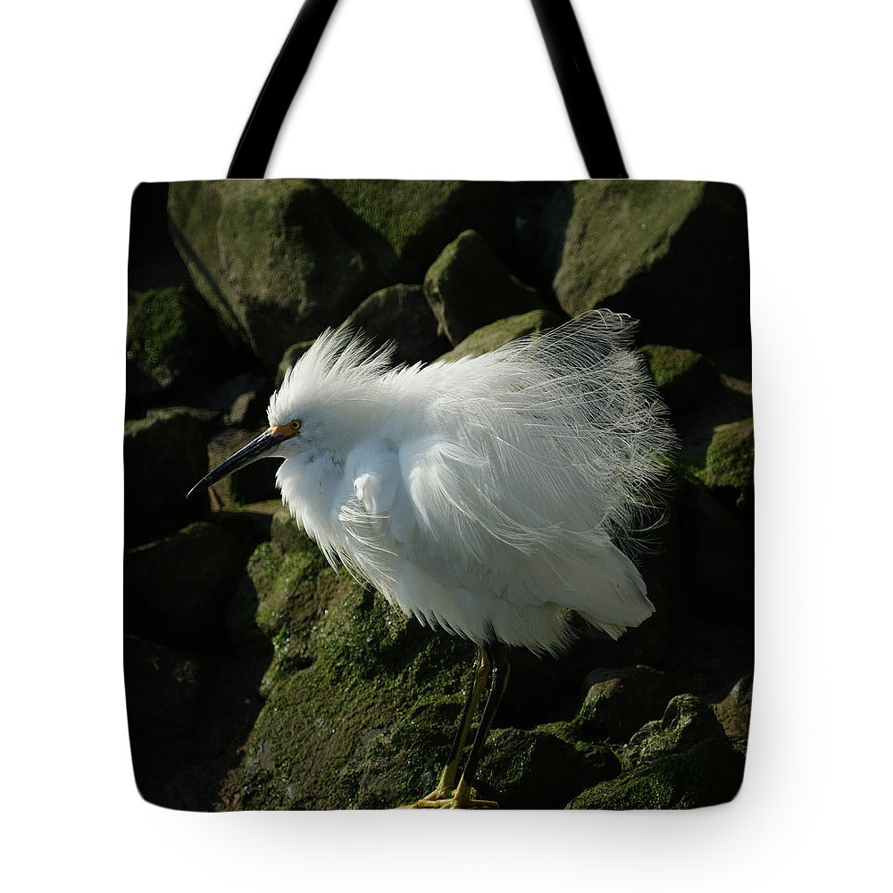 Animals Tote Bag featuring the photograph Snowy Egret Fluffy by Ernie Echols