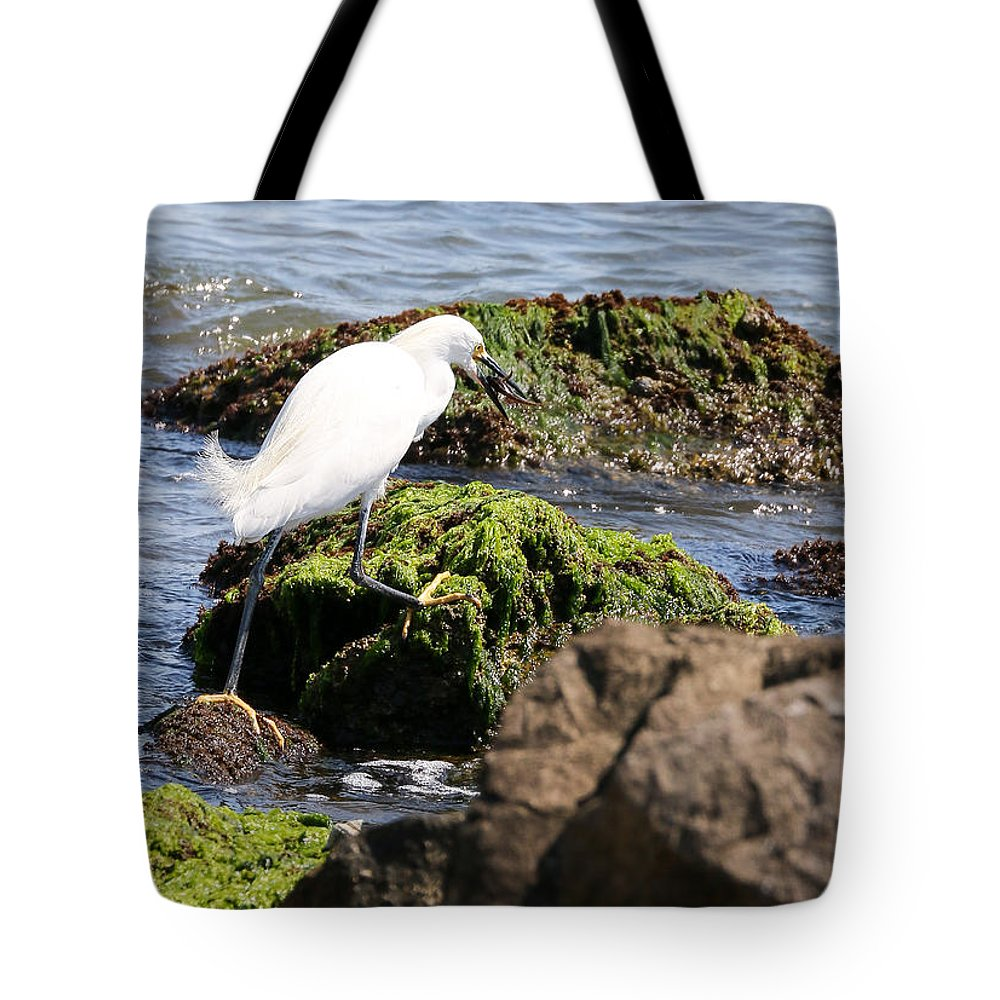 Nature Tote Bag featuring the photograph Snowy Egret Series 2 3 Of 3 Adjusting by David Mayeau