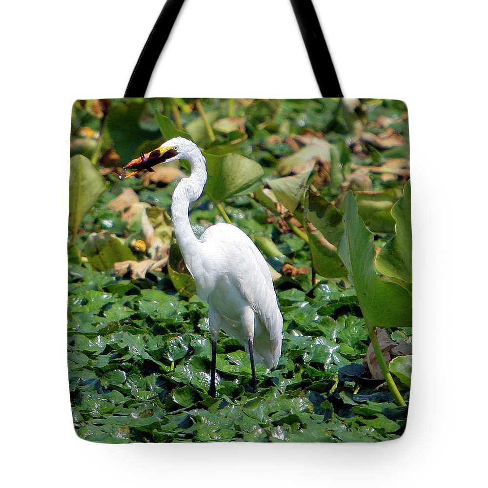 Wild Tote Bag featuring the photograph Snowy Egret by Victor Alcorn
