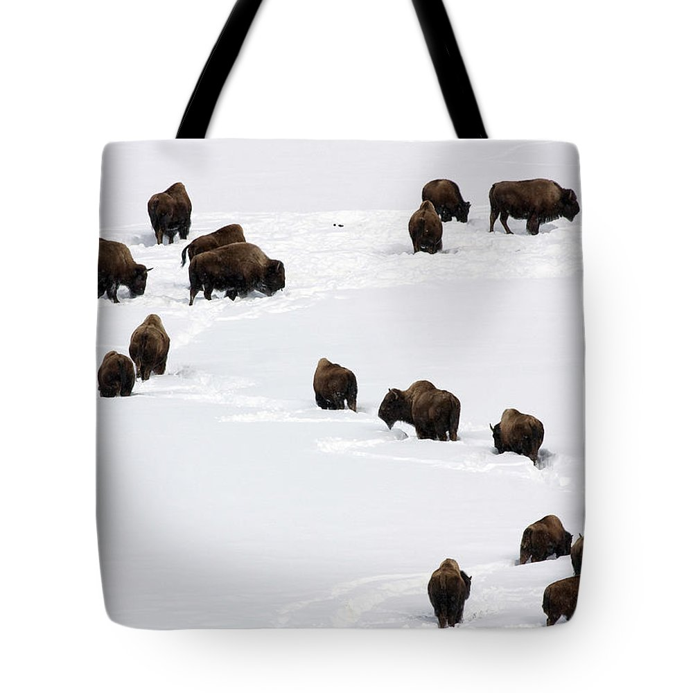 Bison Tote Bag featuring the photograph Snowy Migration by Mary Haber