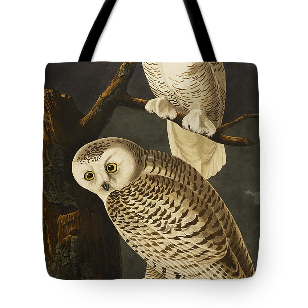 Snowy Owl (nyctea Scandiaca) Plate Cxxi From 'the Birds Of America' (aquatint & Engraving With Hand-colouring) By John James Audubon (1785-1851) Tote Bag featuring the drawing Snowy Owl by John James Audubon