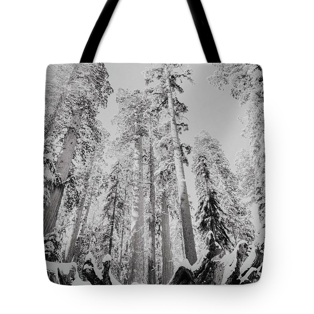 Sequoia Tote Bag featuring the photograph Snowy Sequoias At Calaveras Big Tree State Park Black And White 3 by Steven Jones