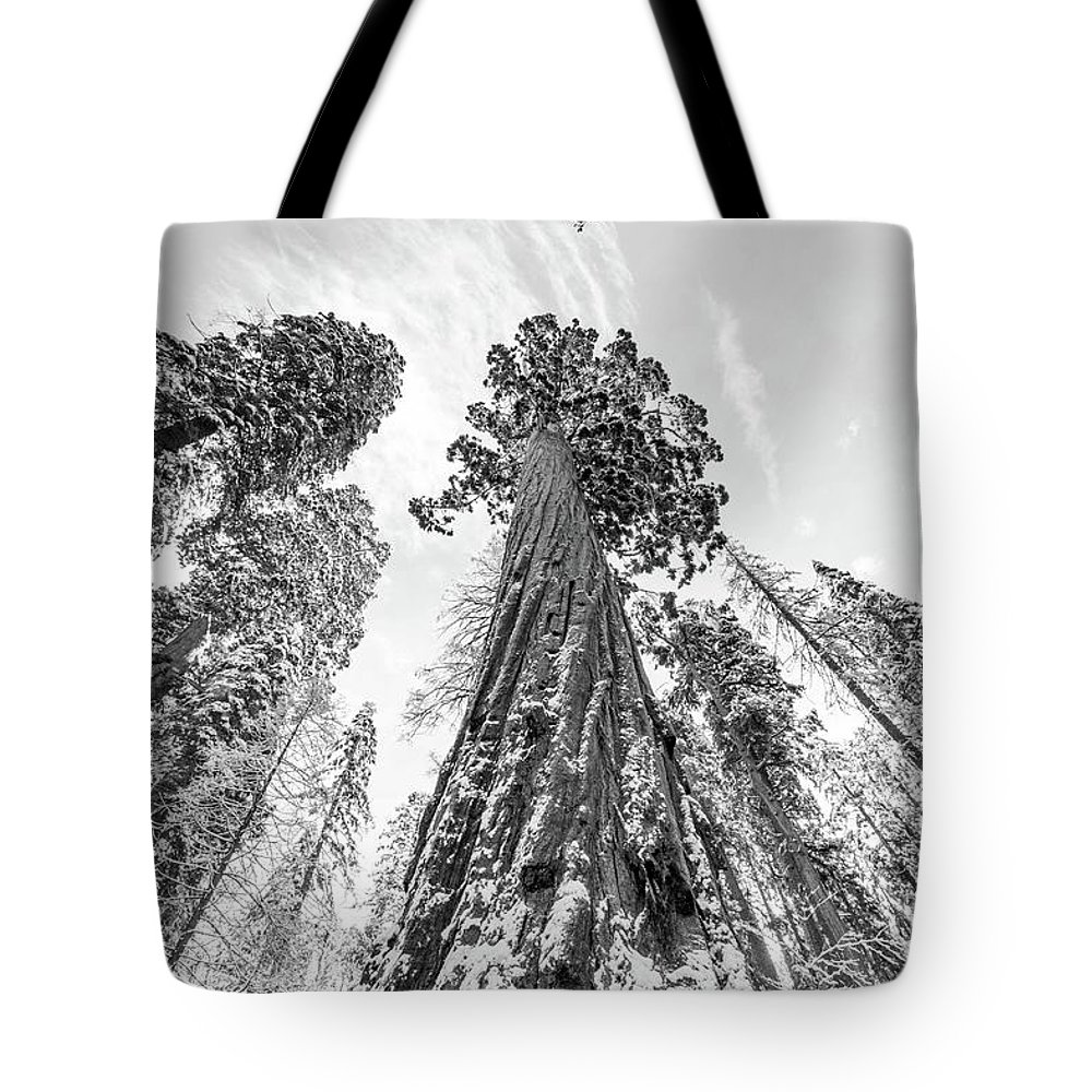 Sequoia Tote Bag featuring the photograph Snowy Sequoias At Calaveras Big Tree State Park Black And White 6 by Steven Jones