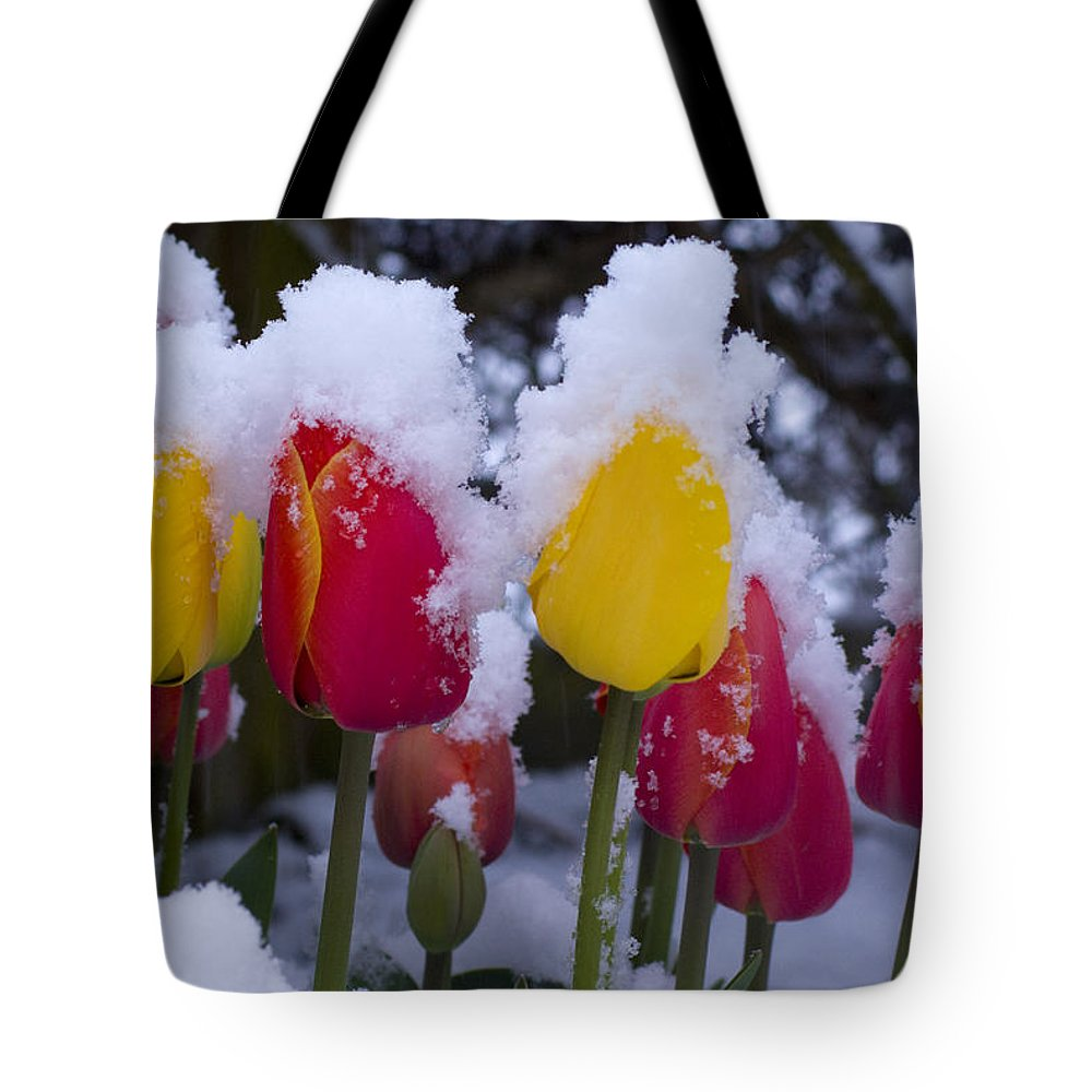 Tulips Tote Bag featuring the photograph Snowy Tulips by Louise Magno