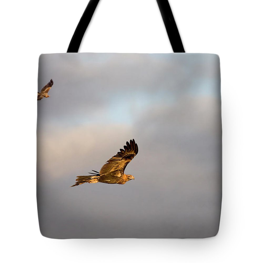 Eagle Tote Bag featuring the photograph Soaring Pair by Mike Dawson