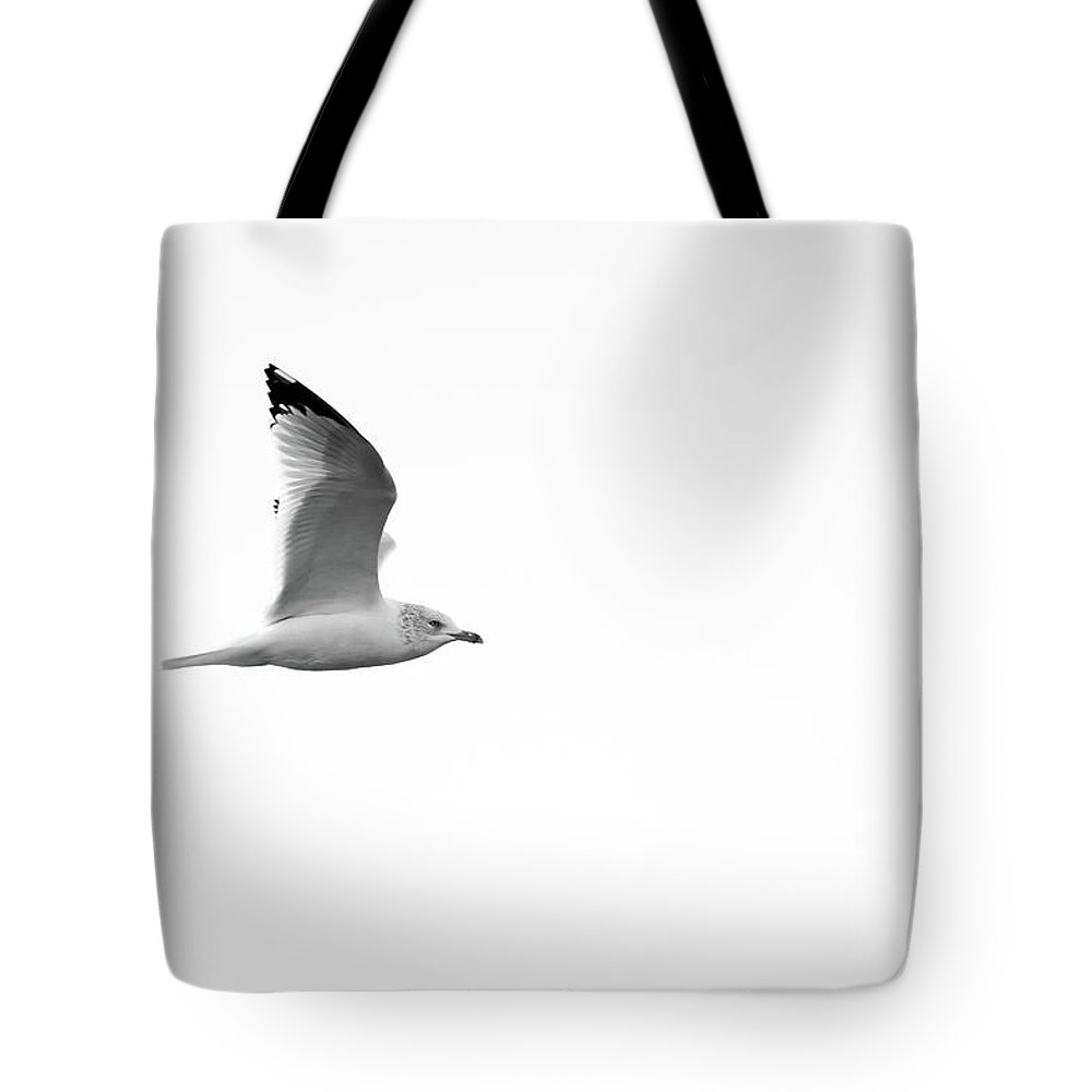 Seagull Tote Bag featuring the photograph Soaring Seagull Black And White by Steven Jones