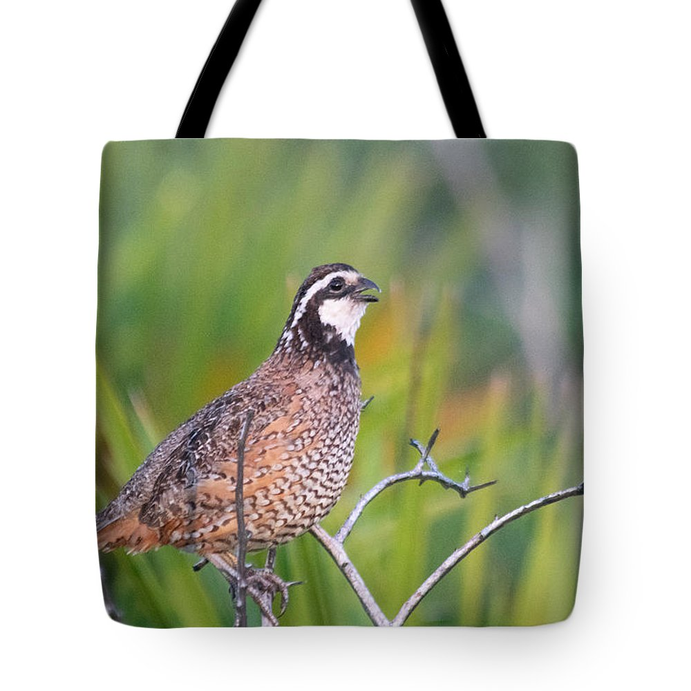 Bobwhite Tote Bag featuring the photograph Softly Whisper My Name...it's Bob by JR Cox