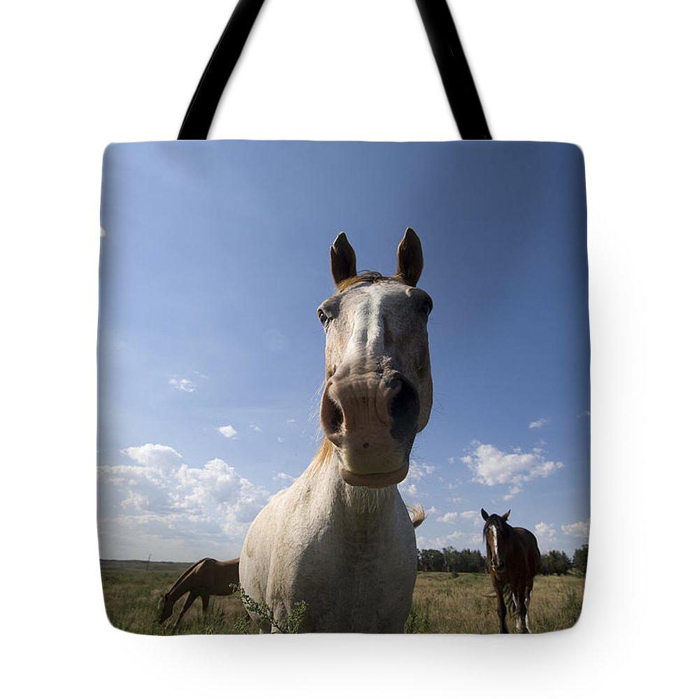 Photography Tote Bag featuring the photograph Some Horses Roam In Burwell, Ne by Joel Sartore