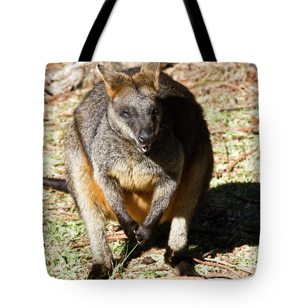 Swamp Tote Bag featuring the photograph Some Privacy Please by Miroslava Jurcik