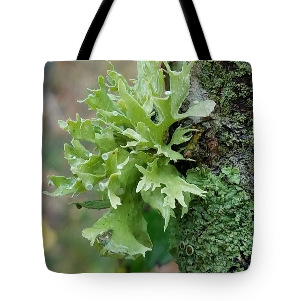 Something Green Tote Bag featuring the photograph Something Green by Maria Urso