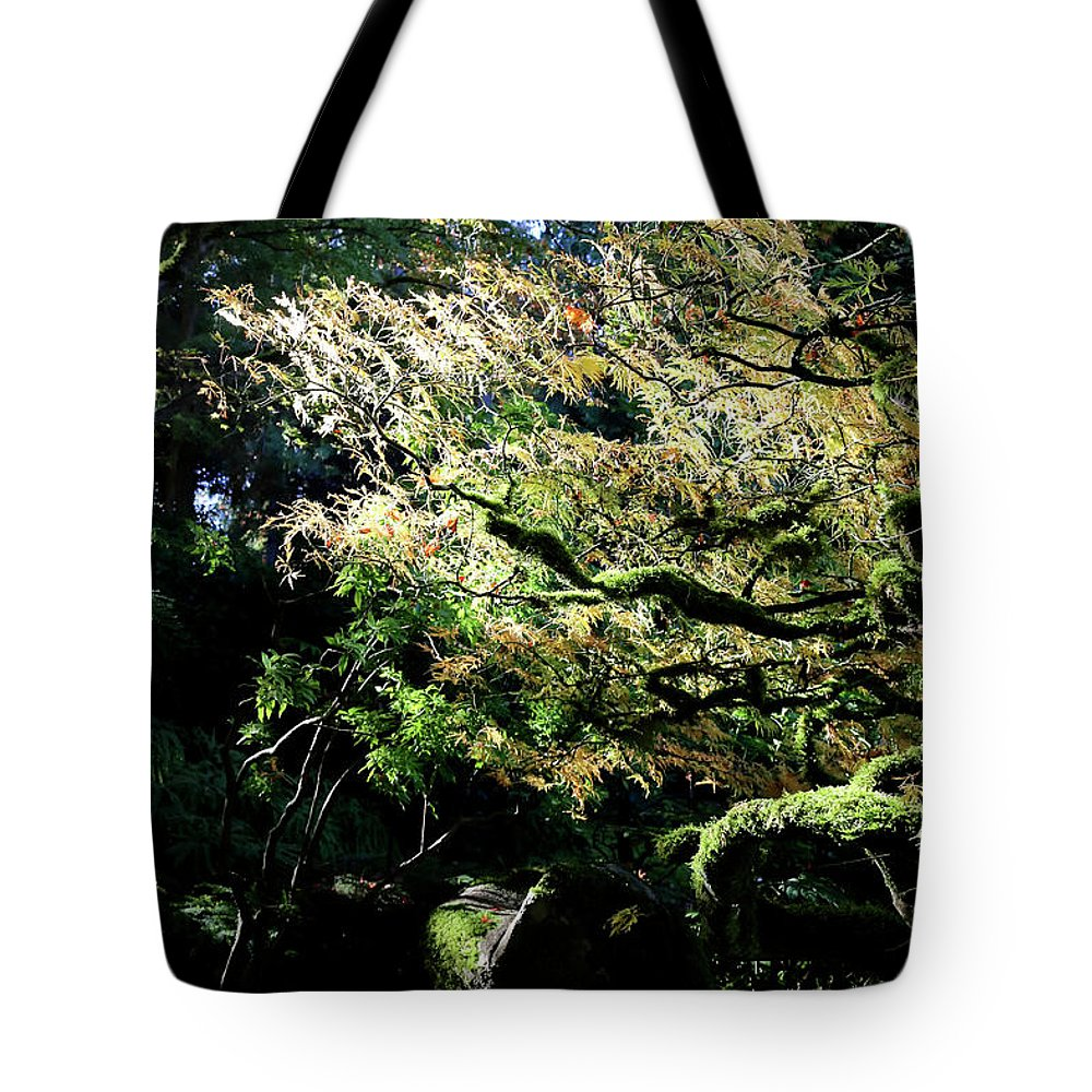Outdoor Tote Bag featuring the photograph Song Of The Light 2. by Andrew Kim