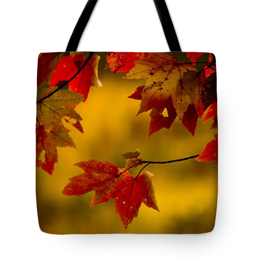 Autumn Color Tote Bag featuring the photograph Soon Enough by Albert Seger