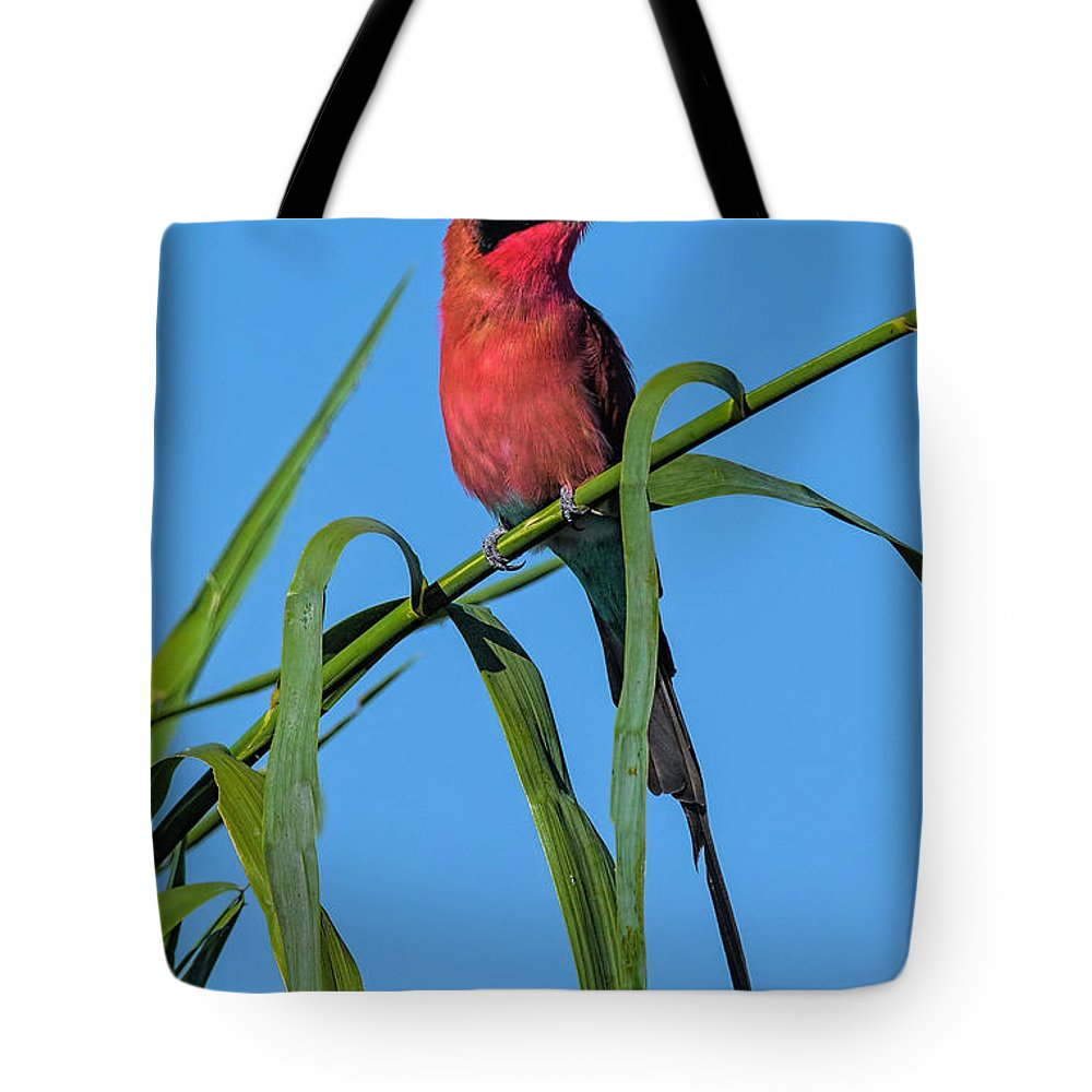 001 Avian Tote Bag featuring the photograph Southern Carmine Bee-eater by Myer Bornstein
