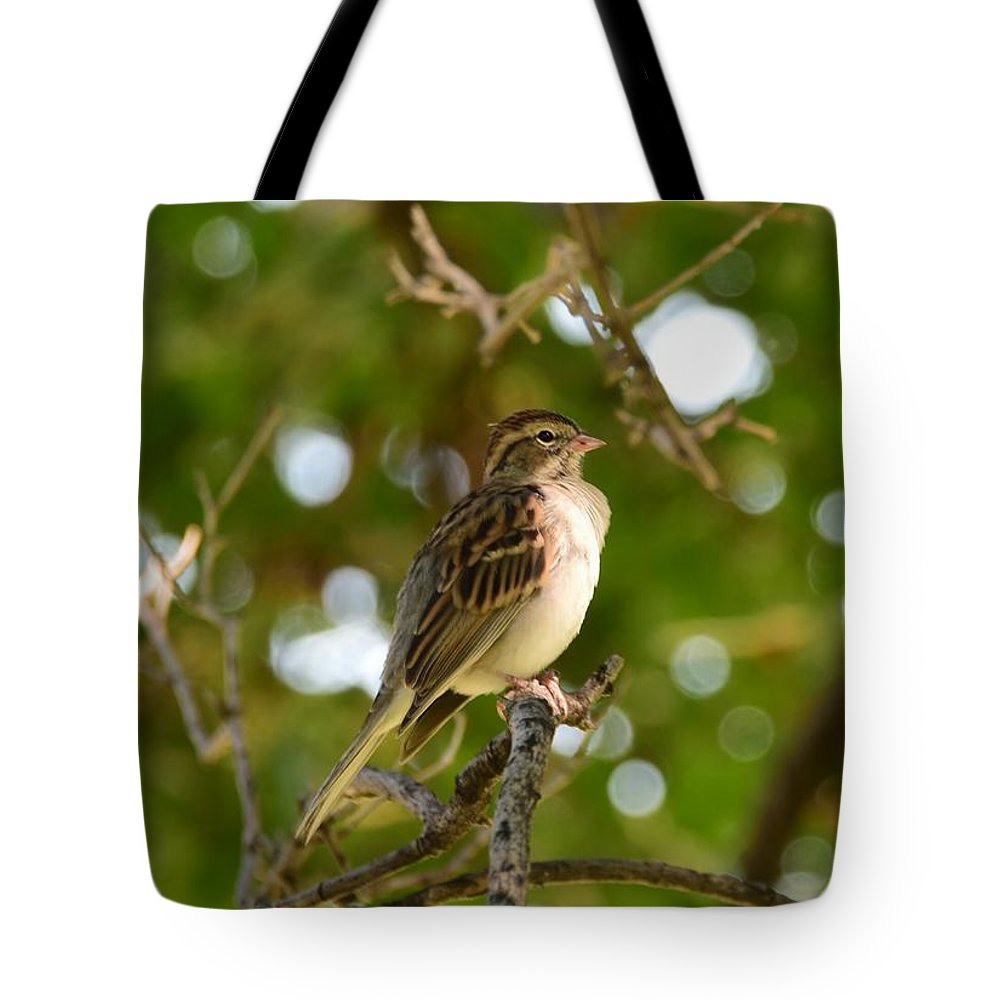 Bird Tote Bag featuring the photograph Sparrow-1 by Floyd Kauffman