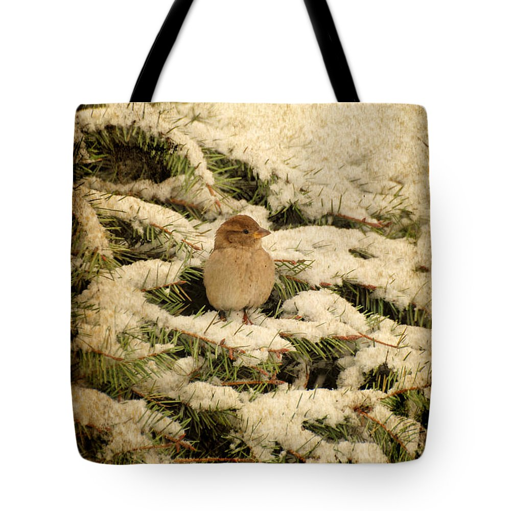 Sparrow Tote Bag featuring the photograph Sparrow In Winter II - Textured by Angie Tirado