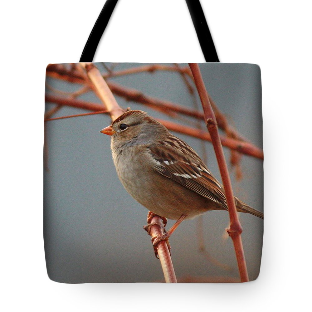 Bird Tote Bag featuring the photograph Sparrow On Grape Vine by Carol Groenen