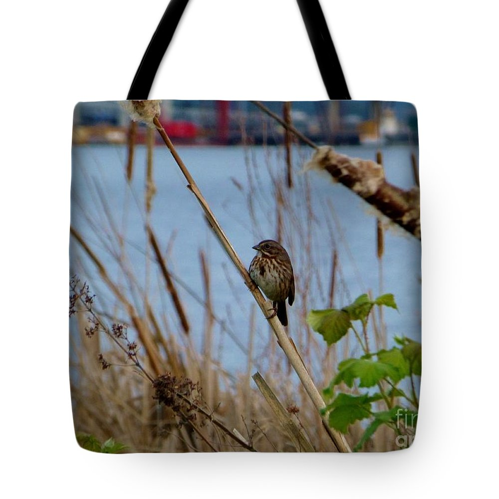 Sparrow Tote Bag featuring the photograph Sparrow On The Cattails by As the Dinosaur Flies Photography