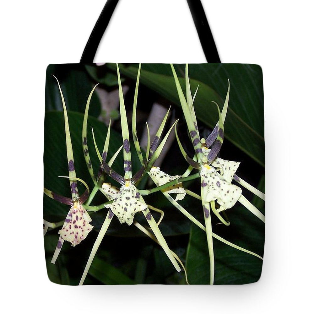 Orchid Tote Bag featuring the photograph Spider Orchid by Joan Gal-Peck