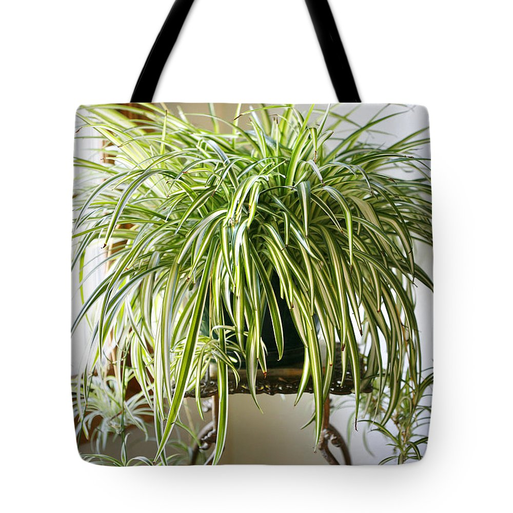 Spider Plant Tote Bag featuring the photograph Spider Plant by Marilyn Hunt