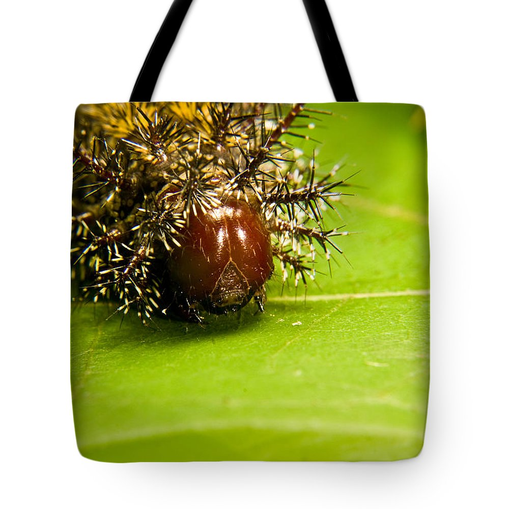 Spiny Tote Bag featuring the photograph Spiny Larvae by Douglas Barnett