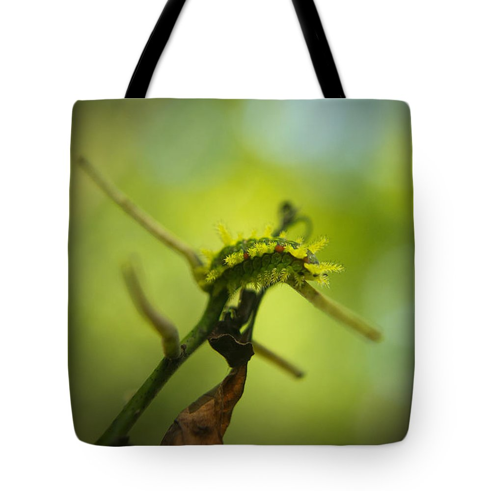 Cove Tote Bag featuring the photograph Spiny Oak Slug Moth 1 by Douglas Barnett