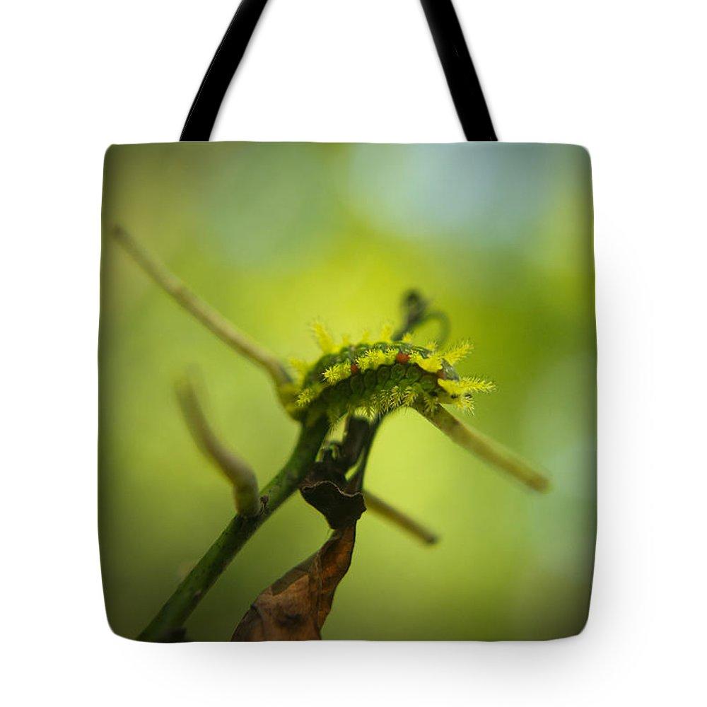 Cove Tote Bag featuring the photograph Spiny Oak Slug Moth 2 by Douglas Barnett