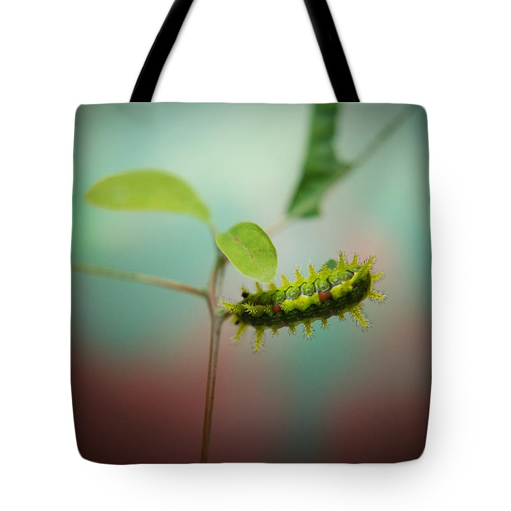 Cove Tote Bag featuring the photograph Spiny Oak Slug Moth 3 by Douglas Barnett