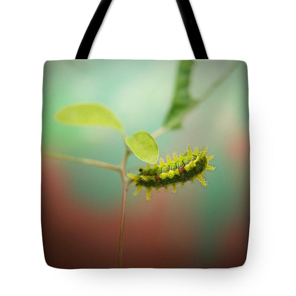 Cove Tote Bag featuring the photograph Spiny Oak Slug Moth 4 by Douglas Barnett