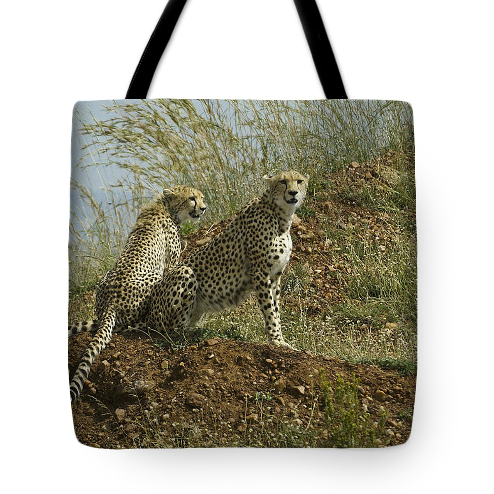 Africa Tote Bag featuring the photograph Spotted Cats by Michele Burgess
