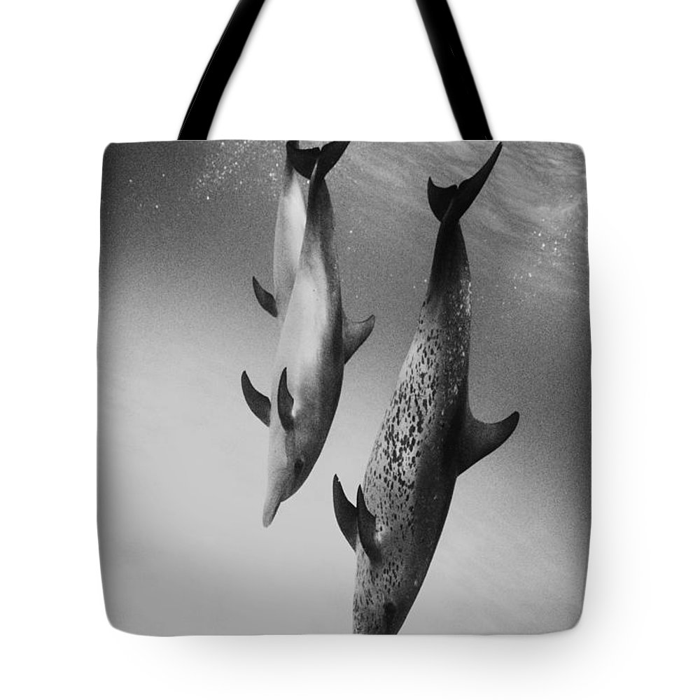 Animal Art Tote Bag featuring the photograph Spotted Dolphins - Bw by Ed Robinson - Printscapes