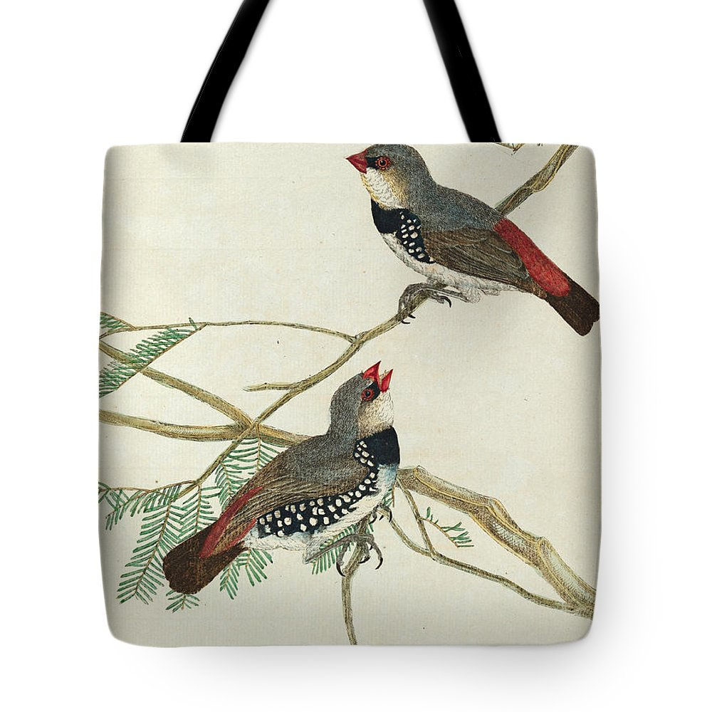 John Lewin Tote Bag featuring the drawing Spotted Grossbeak by John Lewin