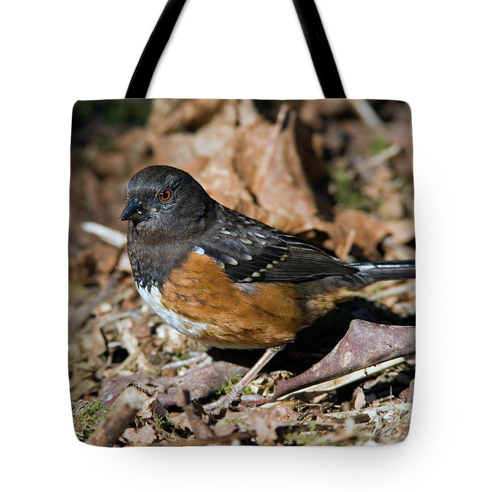 Spotted Towhee Tote Bag featuring the photograph Spotted Towhee by Randall Ingalls