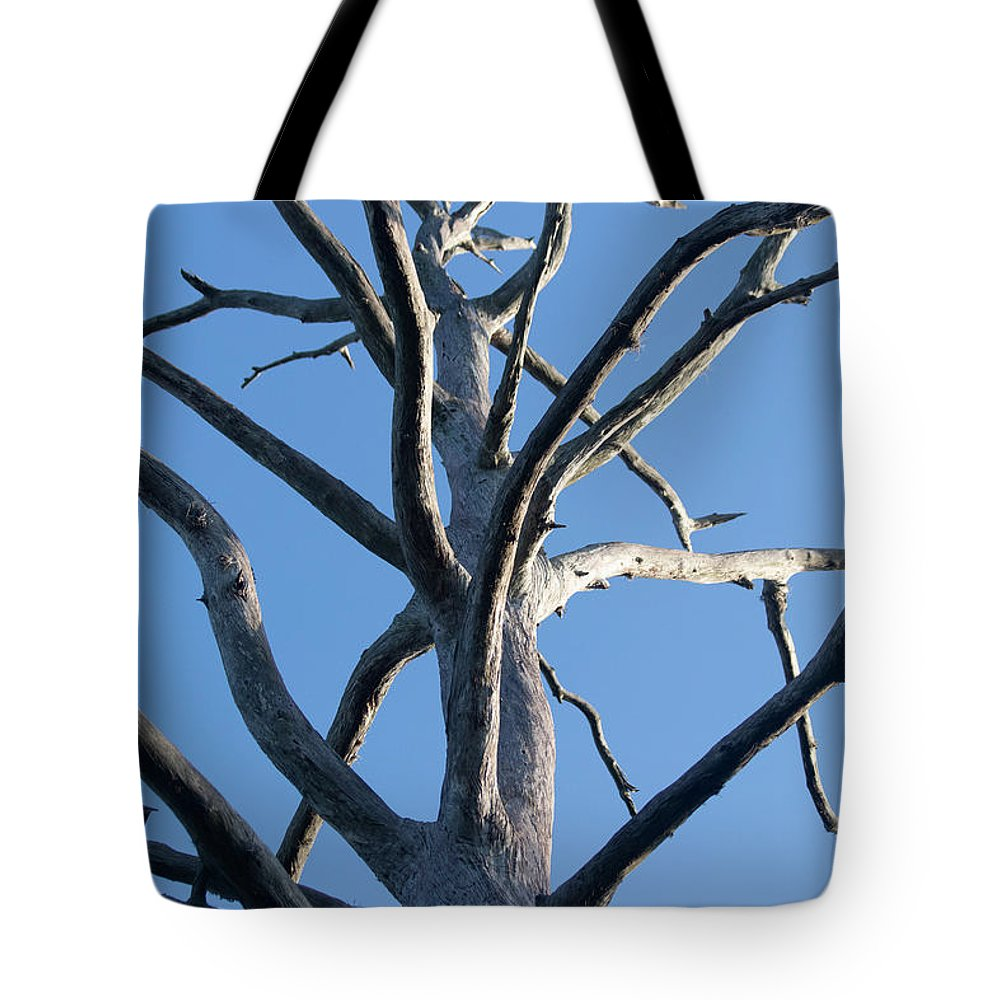 Dead Tote Bag featuring the photograph Sprawling Dead Tree by JR Cox