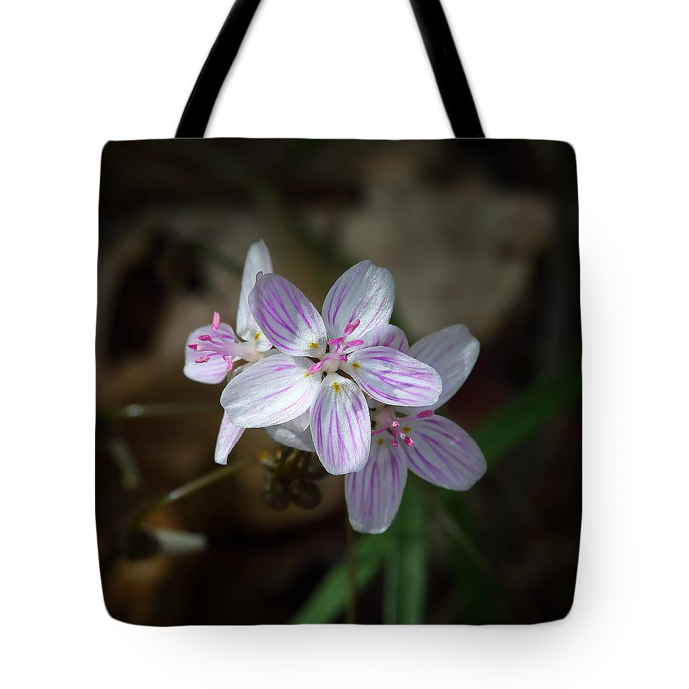 Spring Beauty Tote Bag featuring the photograph Spring Beauty Macro by Michael Dougherty