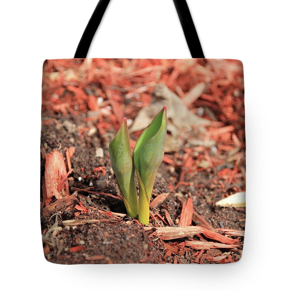 Tulips Tote Bag featuring the photograph Spring Blooms by Stacey Scott