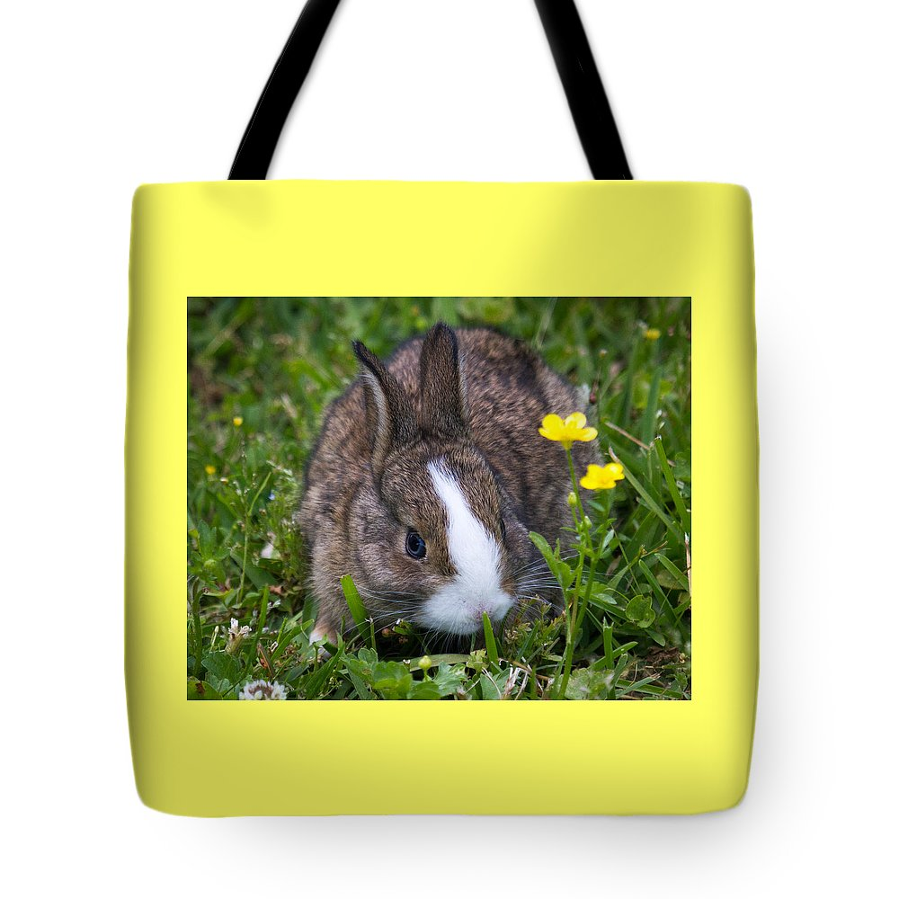Bunny Tote Bag featuring the photograph Spring Bunny by Deb Henman