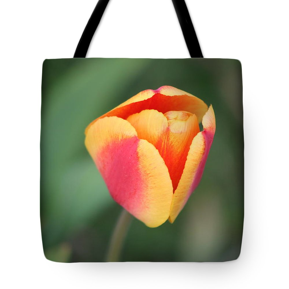 Tulip Tote Bag featuring the photograph Spring Flowers by Gralyn Haller