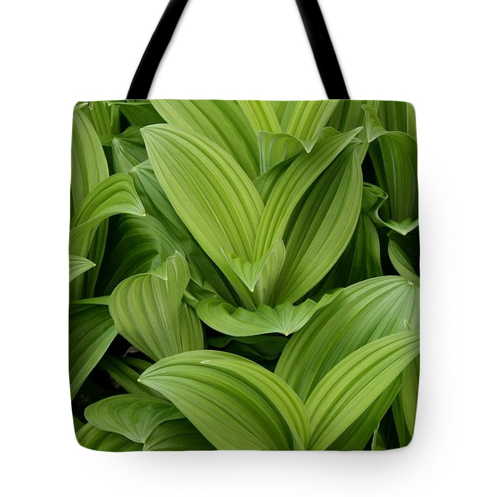 Plants Tote Bag featuring the photograph Spring Green by Angie Schutt