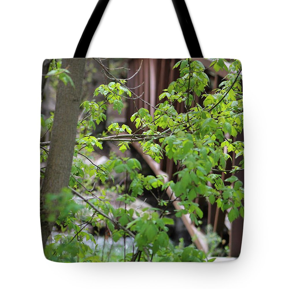 Boxelder Leaves Tote Bag featuring the photograph Spring In The Mountains At American Fork Canyon Utah by Colleen Cornelius