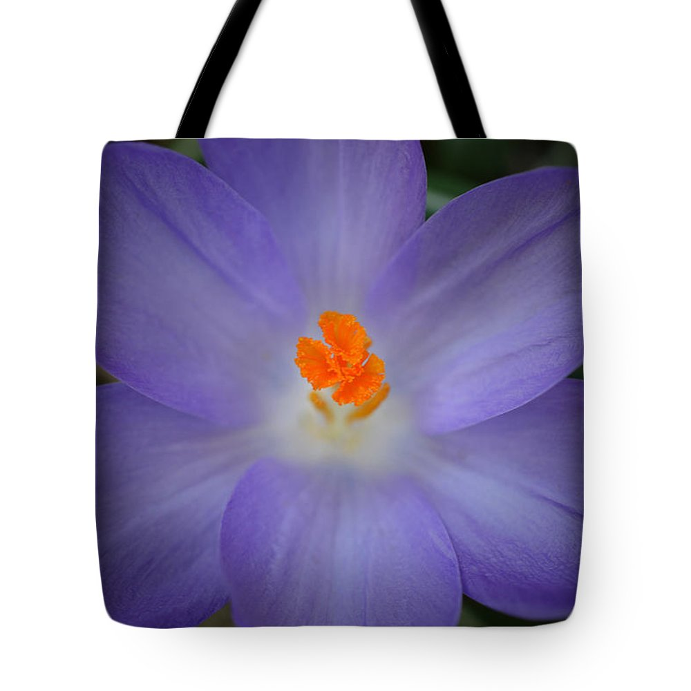 Crocus Tote Bag featuring the photograph Spring Is All Around by Richard Andrews