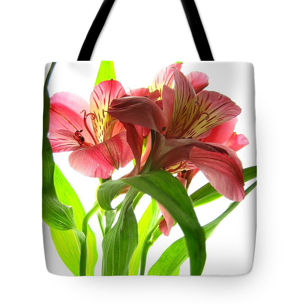 Flowers Tote Bag featuring the photograph Spring by Jane Linders