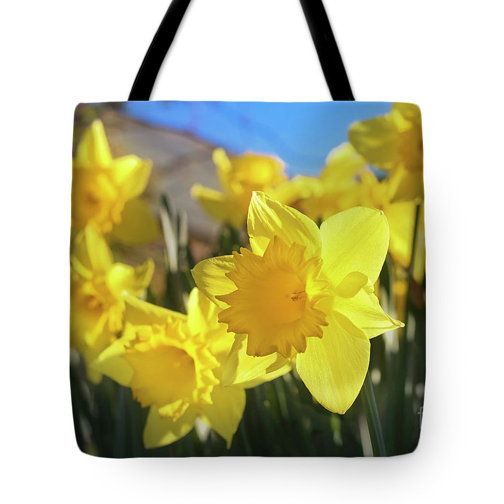 Daffodils Tote Bag featuring the photograph Spring Joy by Terri Waters