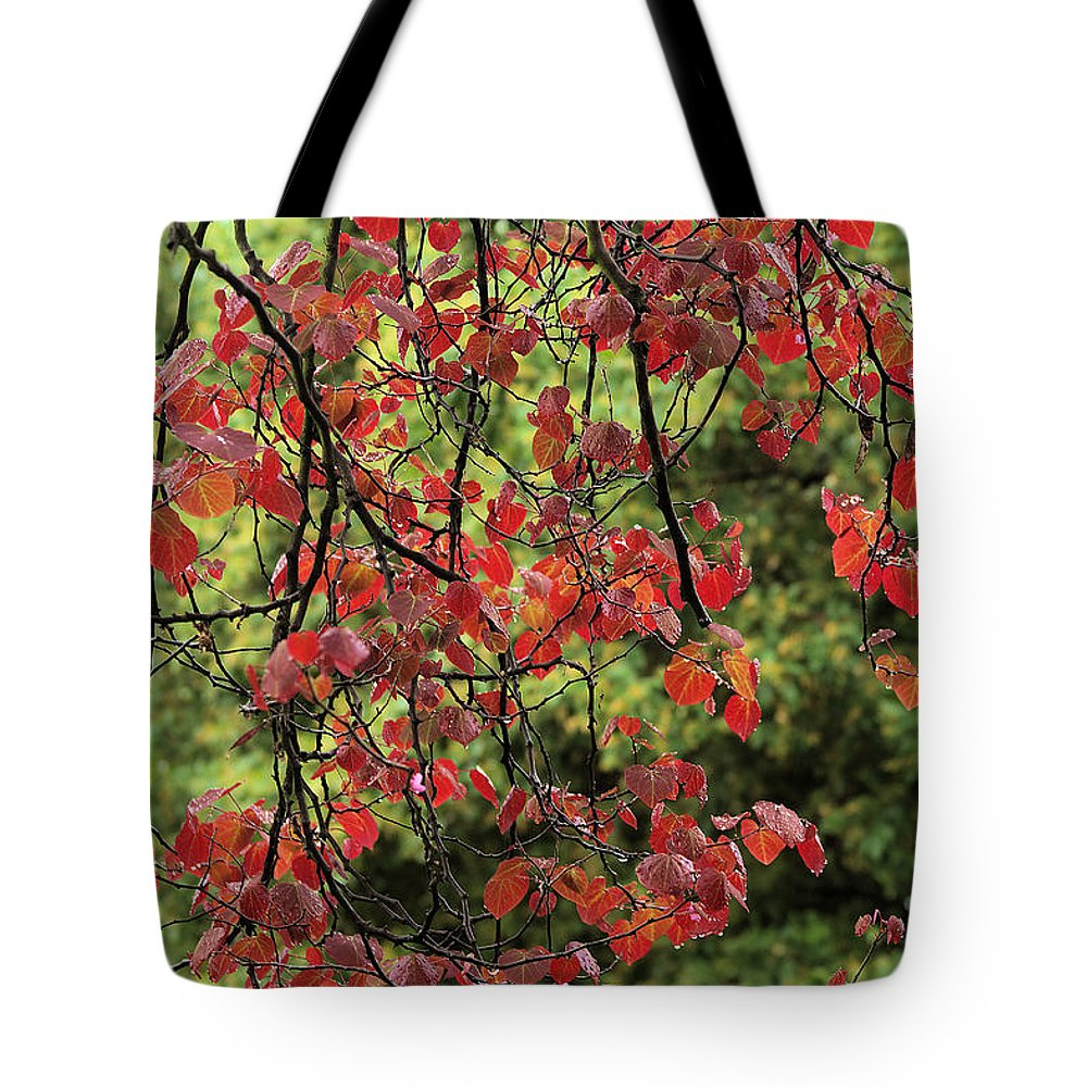 Spring Rain In Descanso Gardens Tote Bag featuring the photograph Spring Rain In Descanso Gardens by Viktor Savchenko