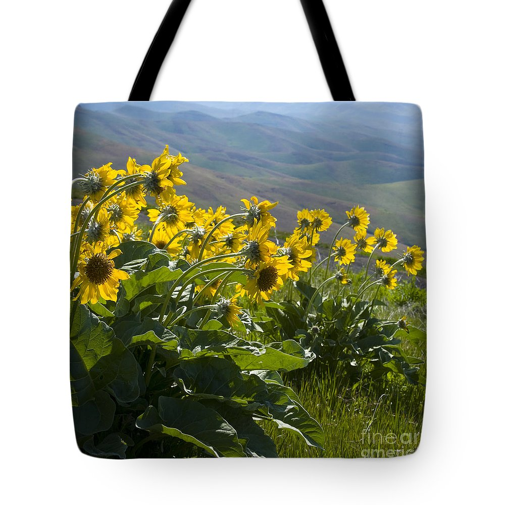 Spring Tote Bag featuring the photograph Spring Sunflowers by Idaho Scenic Images Linda Lantzy