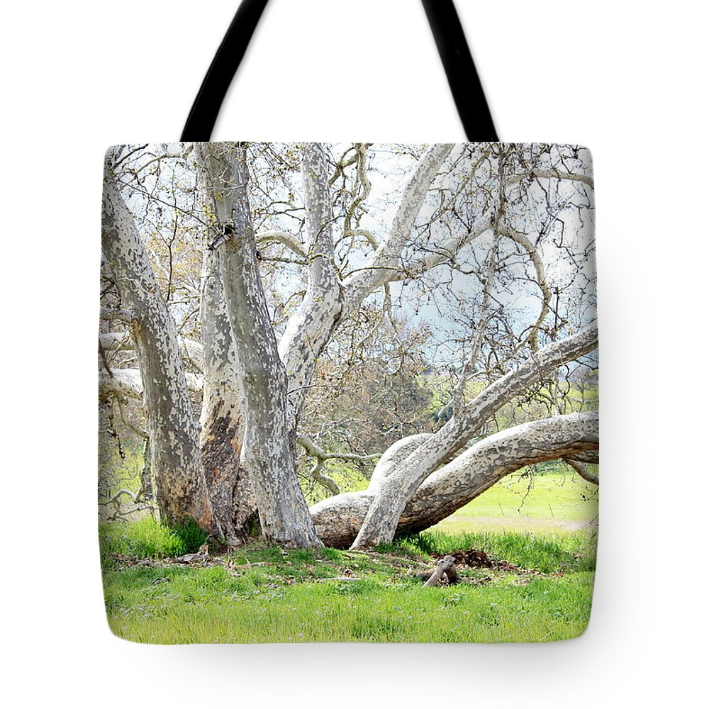 Sycamore Tree Tote Bag featuring the photograph Spring Sycamore Tree by Carol Groenen