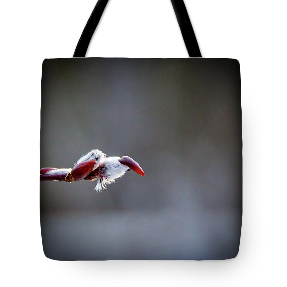 Pussy Willow Tote Bag featuring the photograph Spring Time Pussy Willow by Jeffrey Everets