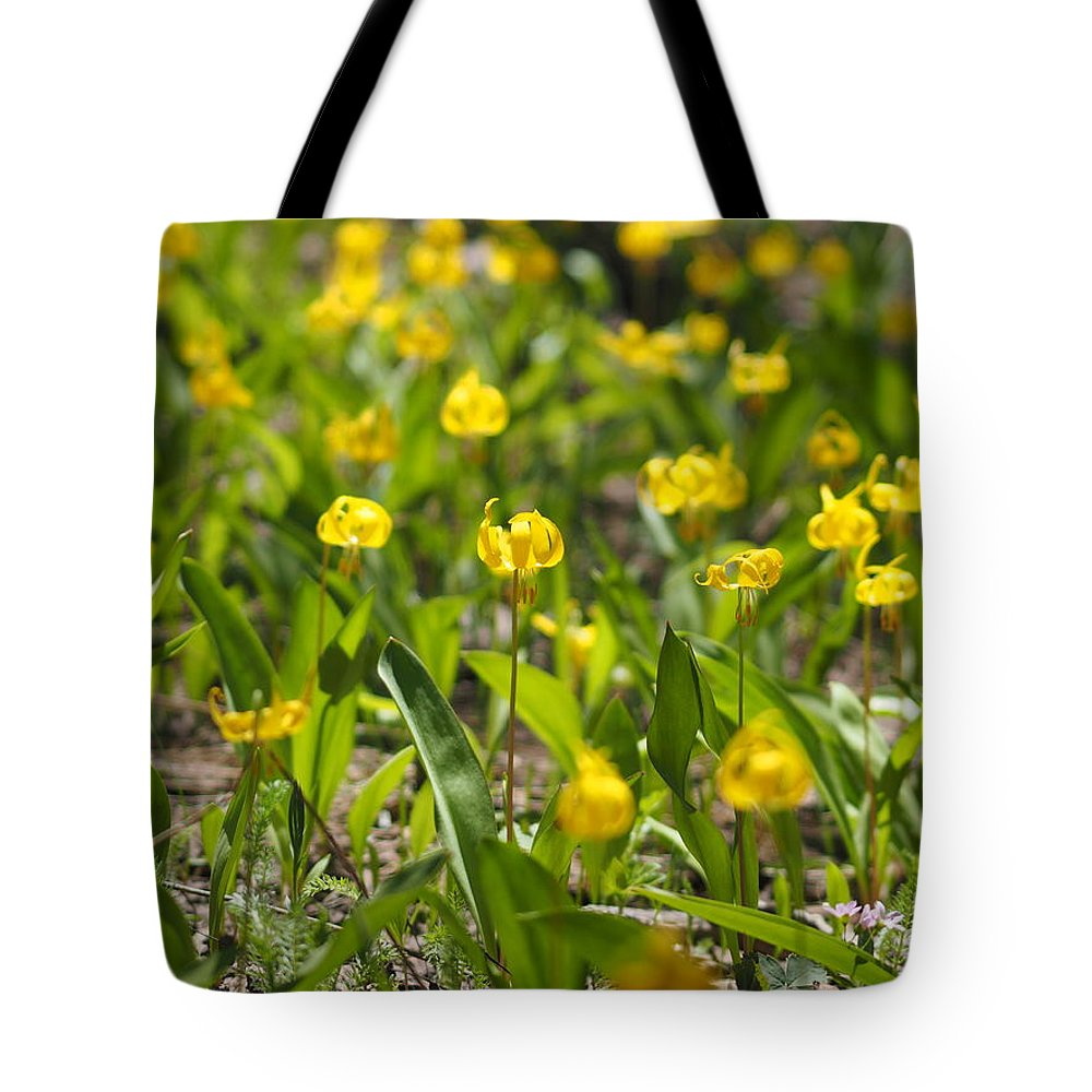 Trout Lilies Tote Bag featuring the photograph Spring Wildflowers by Julie Wyatt