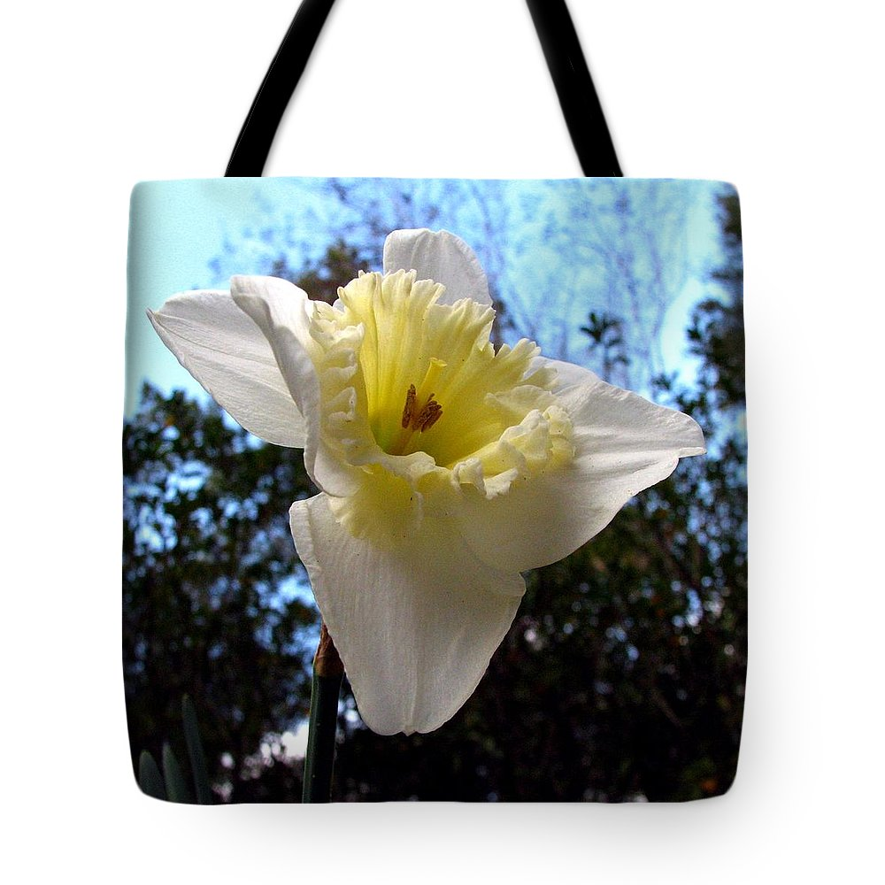 Daffodil Tote Bag featuring the photograph Spring's First Daffodil 2 by J M Farris Photography