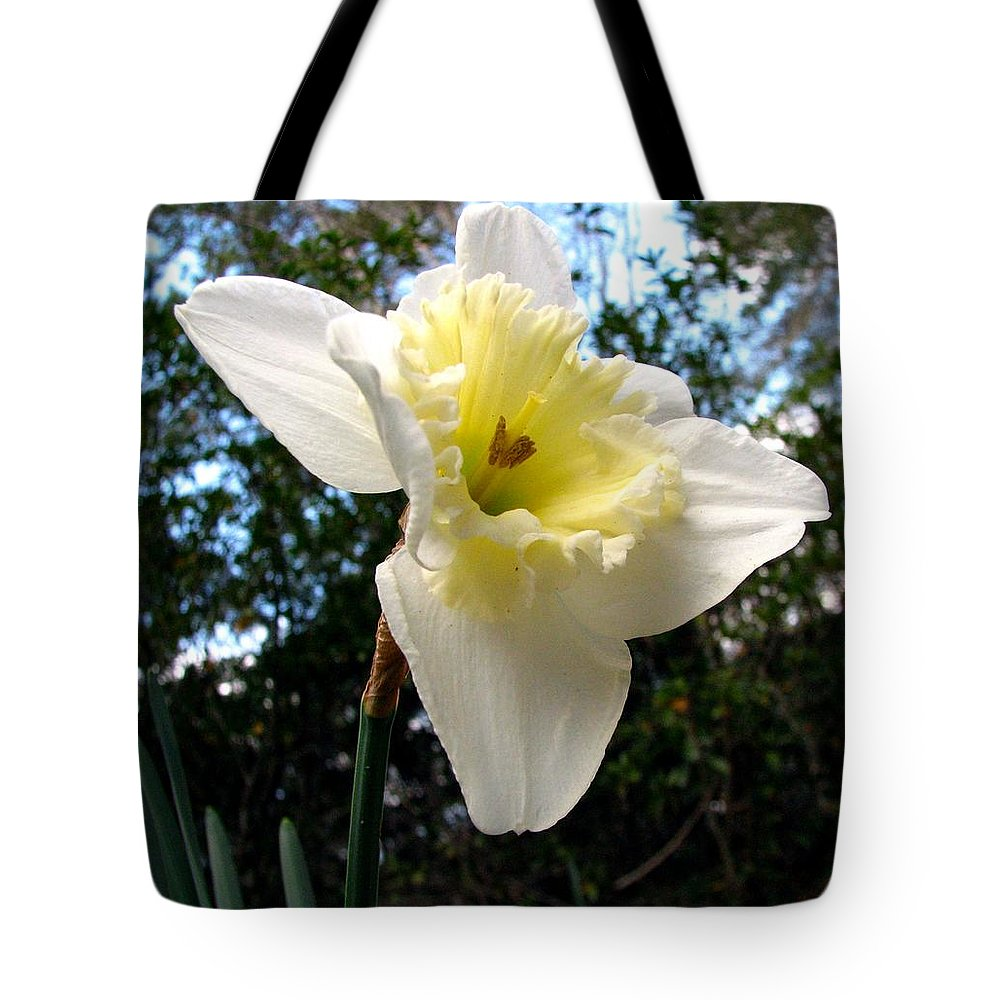 Daffodil Tote Bag featuring the photograph Spring's First Daffodil 3 by J M Farris Photography