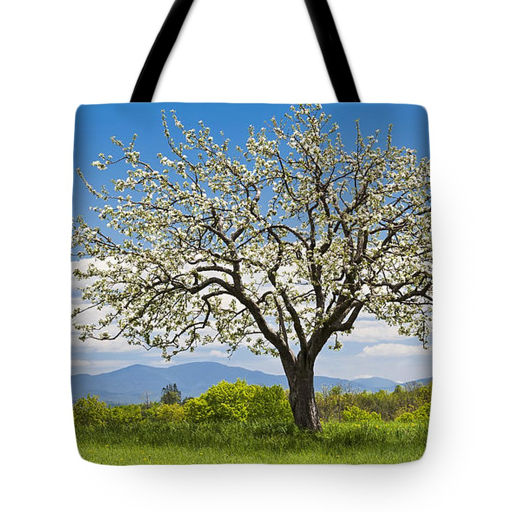 Spring Tote Bag featuring the photograph Springtime Apple Tree Panorama by Alan L Graham